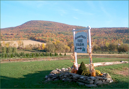 Pleasant Valley Tree Farm